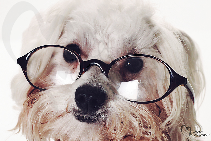 shot of a smart dog with glasses