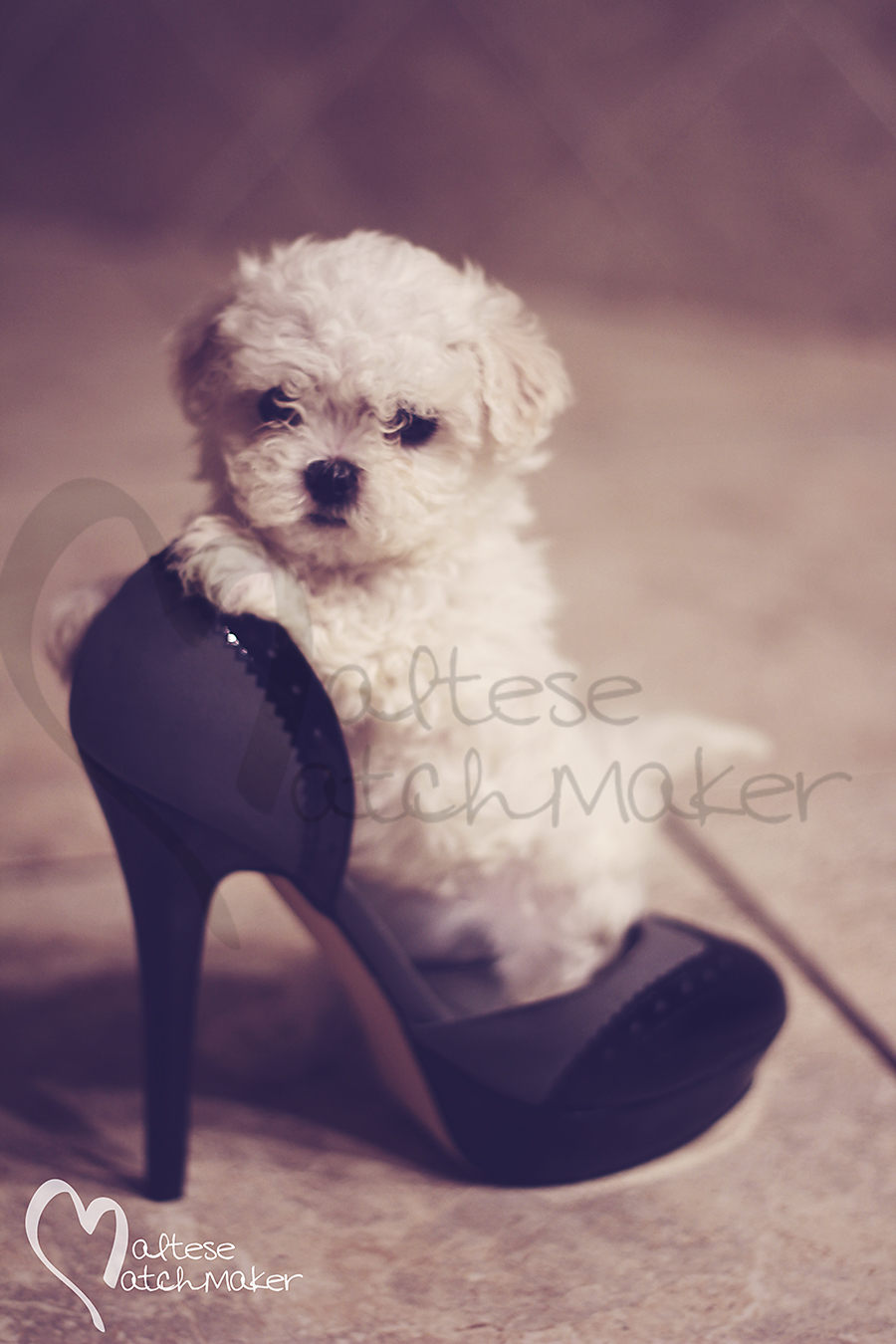 maltese high heel fashion vertical