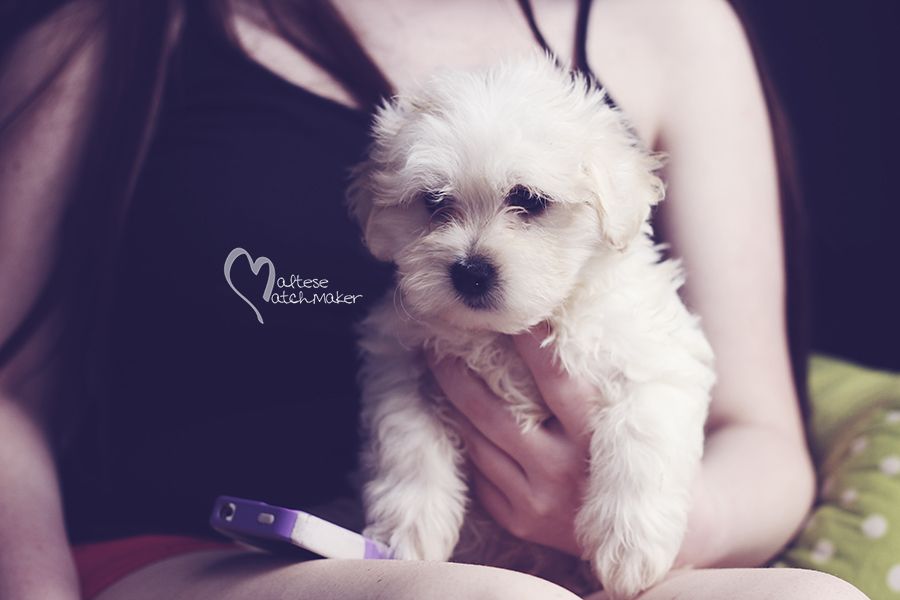 lisa marie male puppy photo 3