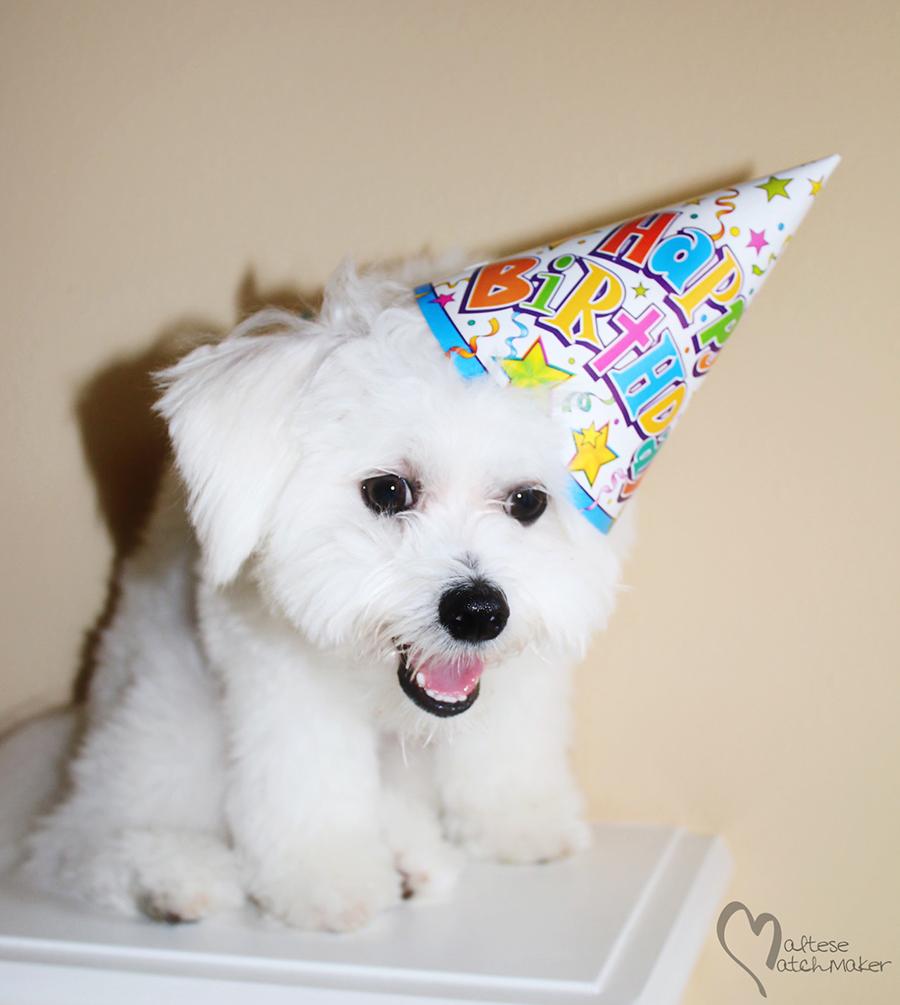 dexter birthday 3 mm