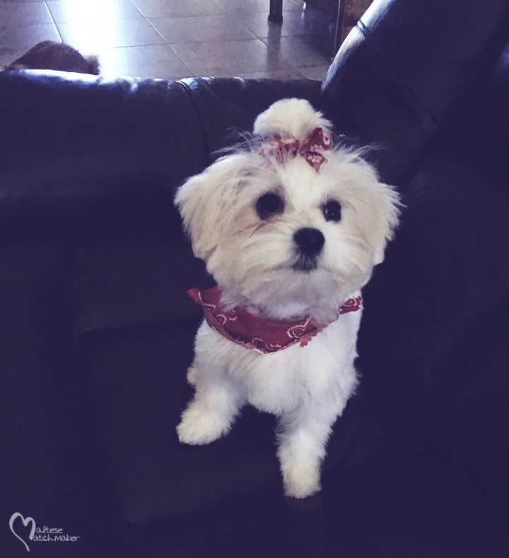 Lulu haircut mm