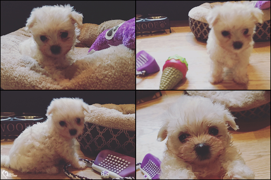 emily maltese baby collage