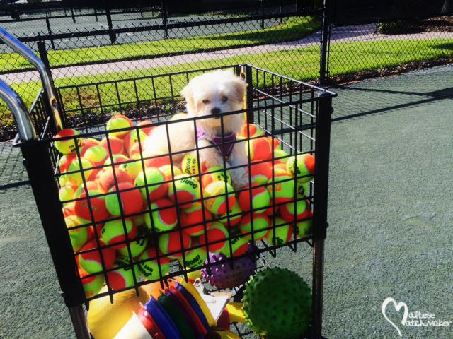 ellie tennis