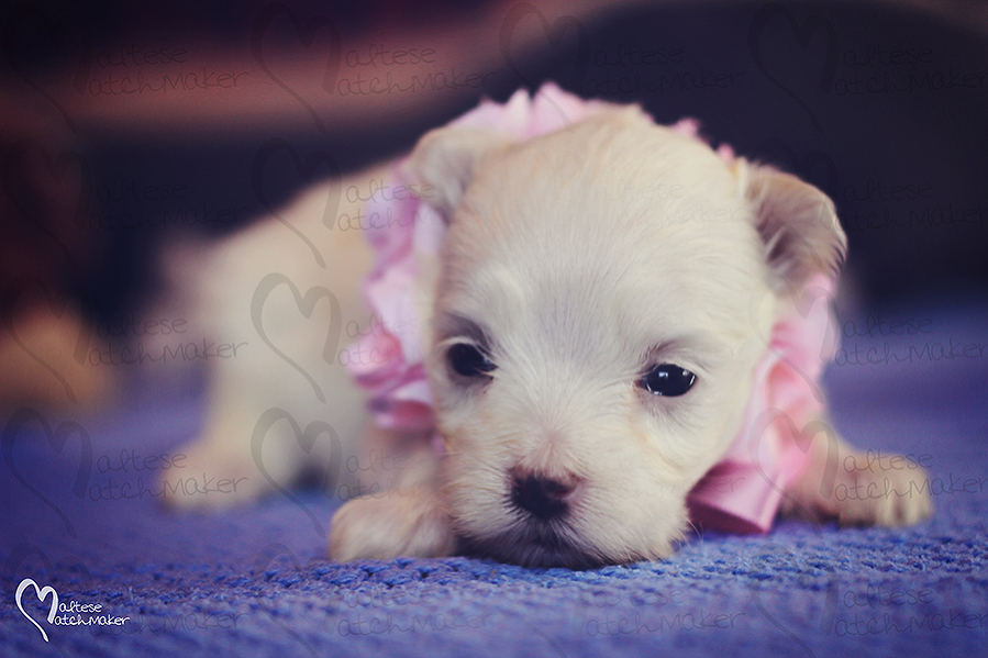 august-female-puppy-flowers