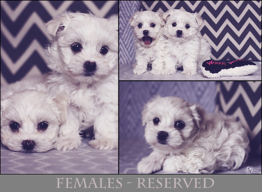 females-collage-reserved-mm