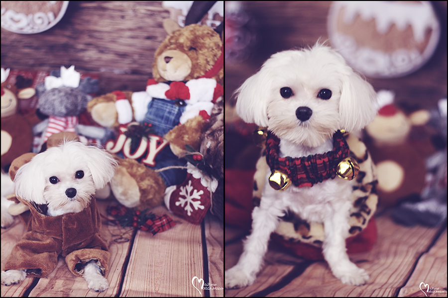 millie-christmas-collage
